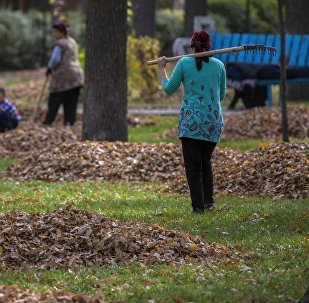Женщина собирает опавшие листья с деревьев в парке в Бишкеке. Архивное фото