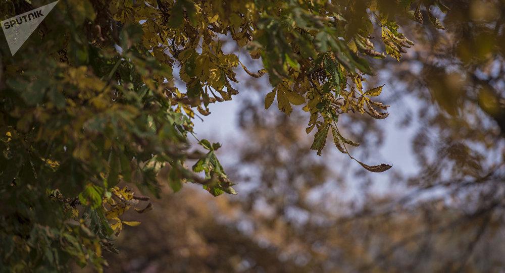 Пожелтевшие листья. Архивное фото
