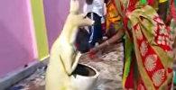 Поклоняются мусорной урне, как божеству, — видео из деревни в Индии