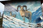 В Караколе инициативные граждане разрисовали стены многоэтажных домов яркими рисунками