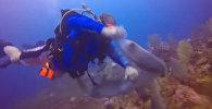 Схватку акулы и дайвера за рыбу записалa камера GoPro