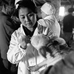 Биохимия жана физиология институтунун лаборанты козуларды эмдеп жатат, 1972-жыл