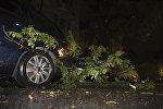 Упавшие ветки деревьев. Архивное фото