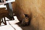 Кошка на улице. Архивное фото