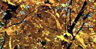 Осенний вальс — Примбердиев спел песню, написанную Атамбаевым