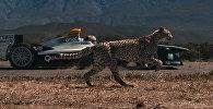 Кто быстрее: гепард или гоночный болид? Захватывающее видео