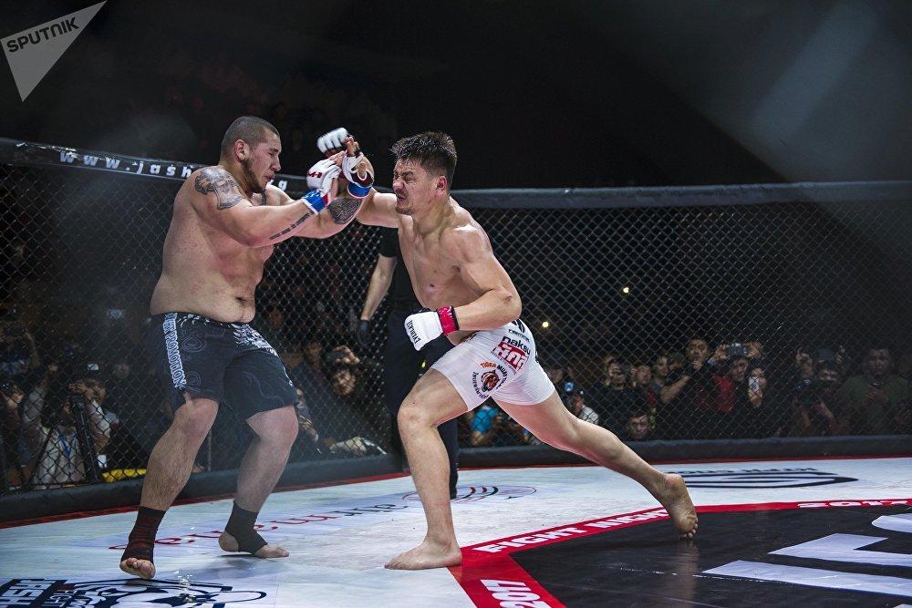 Ак аюу Мамасалиев бокс боюнча чебер болгондуктан, буга чейинки беттештеринин баарын нокаут менен уткан