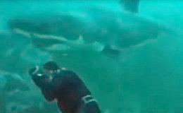 Громадная акула чуть не откусила голову водолазу — видео из ЮАР