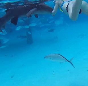 Акула напала на девушку во время подводной экскурсии — видео