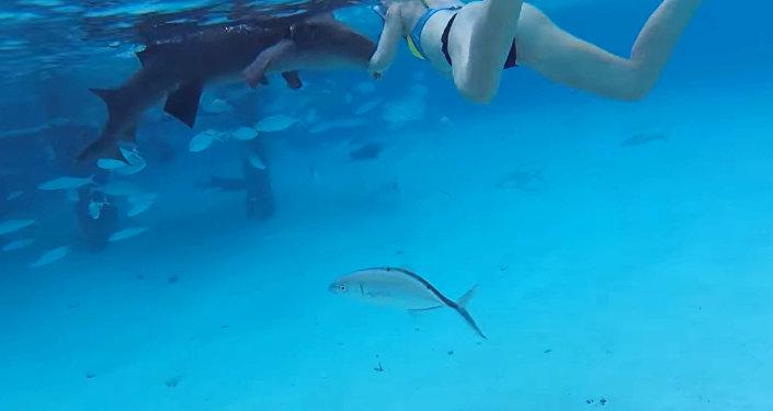 Рыбак чуть нелишился руки, когда спасал хищную рыбу— «Акулья» услуга
