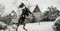 Собака играется со снегом. Архивное фото
