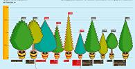 Цены на елки к Новому году в Бишкеке