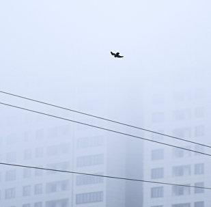 Птица в небе во время тумана. Архивное фото