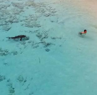 Мальчик чудом спасся от четырех акул — видео