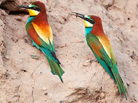 Редкие птицы, обитающих в Кыргызстане на снимках фотографа Ивана Турковского
