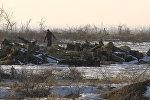 Под Бишкеком массово вырубают деревья и продают — видеодоказательство