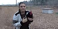 Мектептен кожойкесин чыдамсыздык менен күткөн короздун видеосу