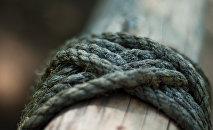 Дерево связанная веревкой. Архивное фото