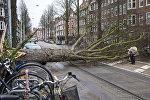 Мужчина у упавшего дерева в результате сильных ураганов в Амстердаме. Нидерланды. 18 января 2018 года