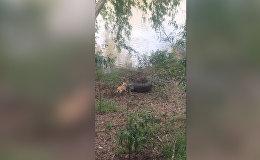 Иттин крокодилди сууга киргизе кууганы видеого түшүп калган