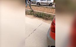 Гигантская кобра вызвала пробку во Вьетнаме