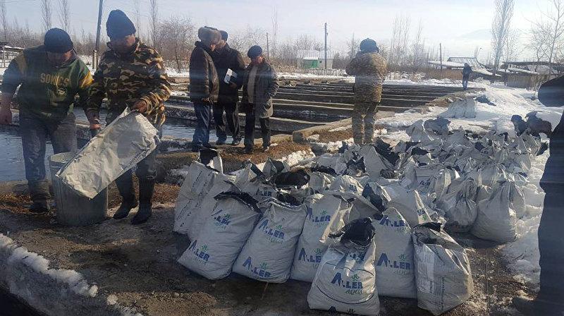 В результате падения бензовоза в реку Чычкан вымерло 2,5 тонны радужной форели на сумму 950 тысяч сомов