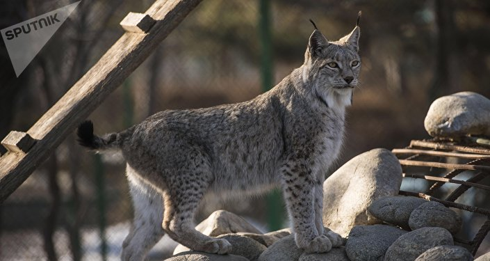 Зоопарк Бугу-Эне в Караколе
