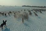 Битва за машины и верблюдов — видео массовой игры кок-бору в Дача СУ
