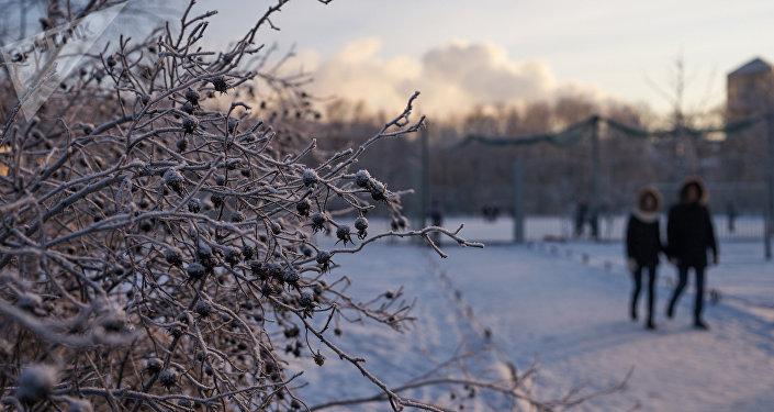 Кустарник, покрытый инеем в парке. Архивное фото