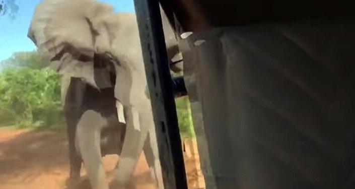 Еле ноги унесли! Нападение слона на автомобиль попало на видео