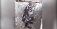 Моется, как человек, — принимающая душ крыса озадачила пользователей Сети