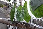 Борбор калаадагы Гареев атындагы ботаникалык бактагы оранжереянын өсүмдүктөрү тоңуп калды