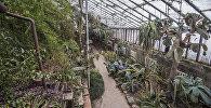 Ботаникалык бактагы үшкүрүк. Чүрүшкөн, жыгылган, муз тоңгон өсүмдүктөрдүн сүрөттөрү