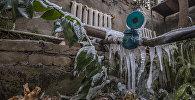 Растения на Ботаническом саду имени Энвера Гареева, замерзшие из-за аварии на ТЭЦ Бишкека. Архивное фото