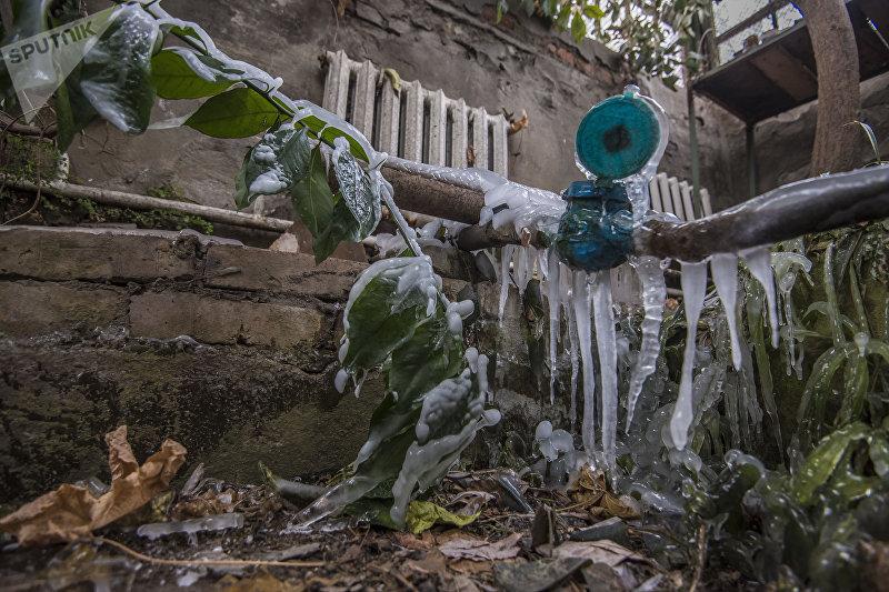 Растения на Ботаническом саду имени Энвера Гареева, замерзшие из-за аварии на ТЭЦ Бишкека