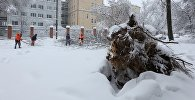 Сотрудники коммунальных служб во время уборки дерева упавшего на автомобильную дорогу в следствии снегопада в Москве.