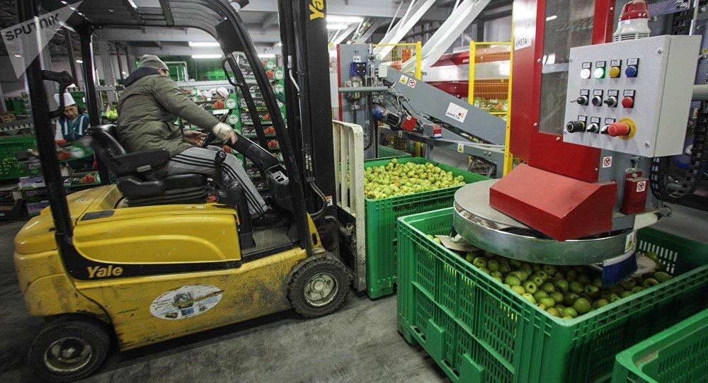 Погрузчик в цеху сортировки и хранения фруктов, овощей. Архивное фото