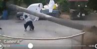 Невероятное везение! В Таиланде засохшее дерево чудом не придавило ребенка