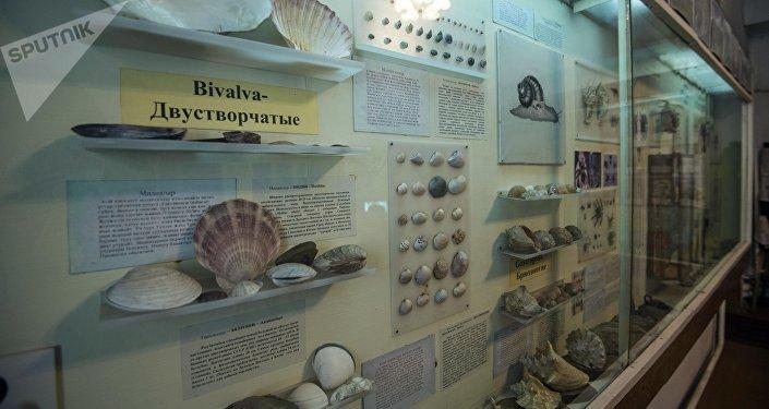 Зоологический музей в здании НАН КР в Бишкеке