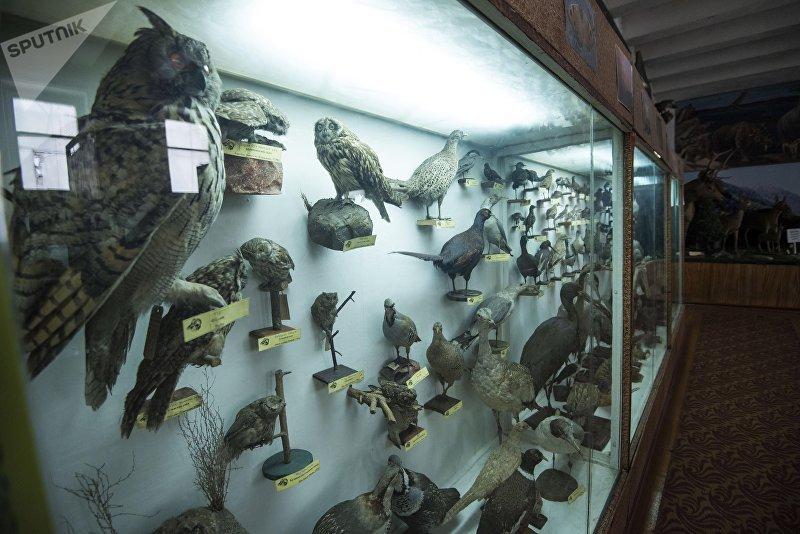 Чучело диких птиц в зоологическом музее Национальной академии наук КР в Бишкеке