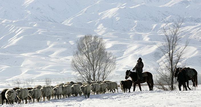 Пастухи с стадом овец на предгорьях горы. Архивное фото