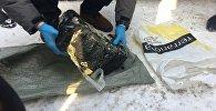 Бишкекте Ички иштер министрлигинин мурдагы жана азыркы кызматкерлери 8 килограмм гашиш менен кармалды