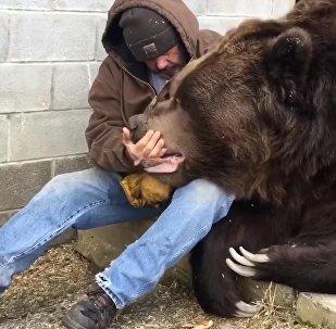 Соцсети тронуло видео с мужчиной, ласкающим огромного медведя