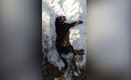 Дочь рыдала, пса убивали при ней — кыргызстанка о случае под Бишкеком