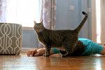 Мужчина притворился мертвым, чтобы увидеть реакцию своей кошки, — видео