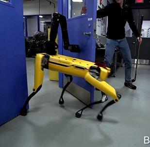 Собаку-робота учат сопротивляться человеку — удивительное видео