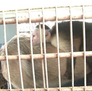 Собака заменила мать маленькой обезьяне — трогательное видео