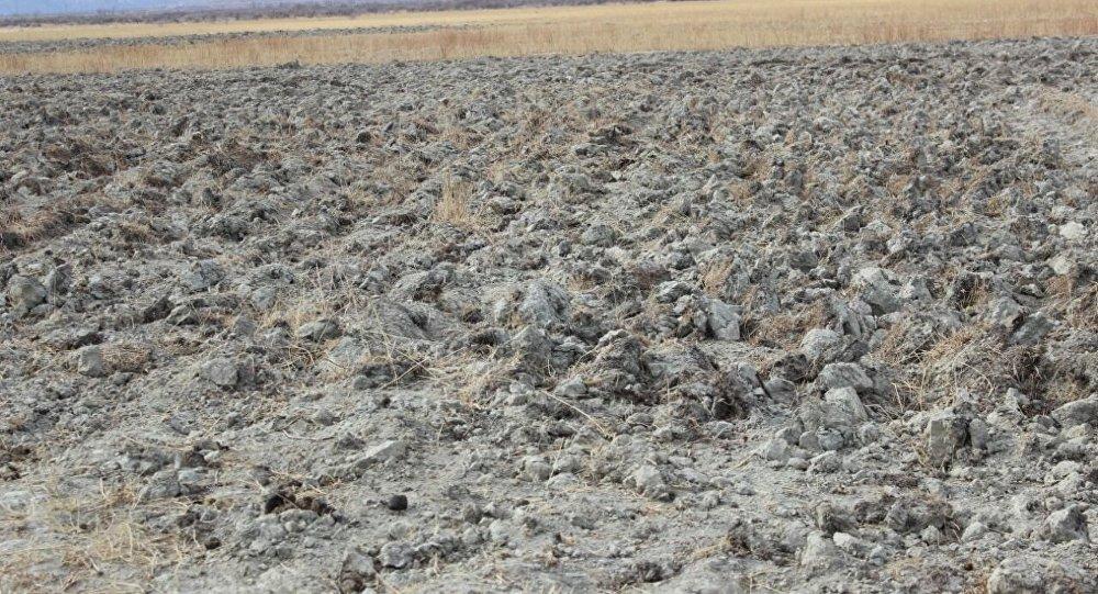 В Иссык-Кульской области неизвестные привели в негодность 30 гектаров пастбищ