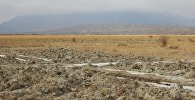 Неизвестные раскопали корни солодки на 30 гектарах в Тонском районе
