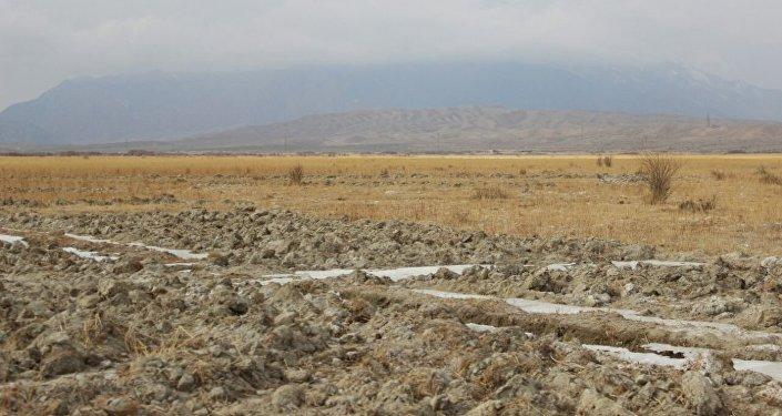 Происшествие случилось на выпасах участка Саз села Кок-Мойнок Тонского района